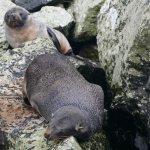 Milford Sound Foto