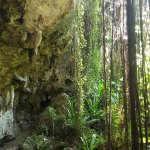 Caves and Roots