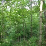 Forest near the hotel is small but offers short hikes with a taste of nature.