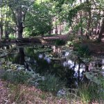 A gorgeous red squirrel and a sika deer and a lovely lily pond for all to discover on Brownsea I