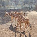 Giraffes are always a crowd pleaser