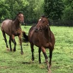 The Horses on the Property