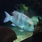 great fish to watch in the fish tank while you wait for your table