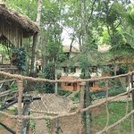 Treehouse, restaurant and room pics