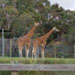 Halls Gap Zoo Photo