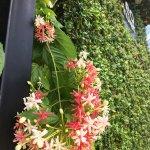 ideo phuket hotel in green season 🍀🍀