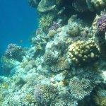 Élet a víz alatt