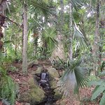 In the Aboriginal Plant Use Garden