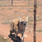 Photo of Daniell Cheetah Project