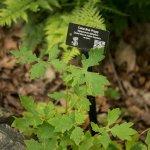 Excellent Plant Labeling