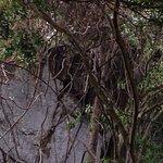 Foto de Yelapa Waterfalls