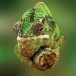 Chameleon on Ria Formosa Natural Park - Hop On Hop Off Islands Faro