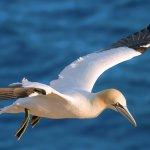 Bird Watching Ria Formosa Natural Park - Hop On Hop Off Faro