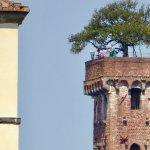 Guinigi Tower of Lucca