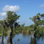 Florida Cracker Airboat Rides & Guide Service Photo