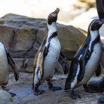 Penguin Cove