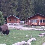 ภาพถ่ายของ Pine Edge Cabins