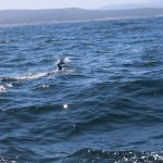 Whale Watching Tour - Dolphins