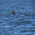 Whale Watching Tour - Sea Lion