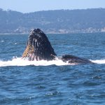 Whale Watching Tour - Humpback Whales