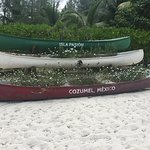 Different use for canoes----PLANTERS