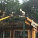 Photo de Goats on the Roof