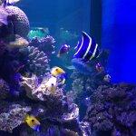 Photo of Interactive Aquarium