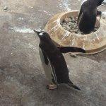 Foto de Edinburgh Zoo