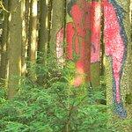 Wald der Bilder