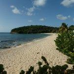SeaGrape beach