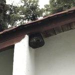 Avispas justo en el patio de la cabaña en donde está la parrilla para asar carne