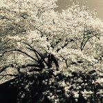 #16 Shizuoka, Japan