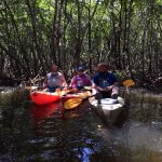 Lido Mangrove Tour