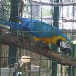 A Macaw from Central & South America & this Macaw likes to say Hello..