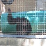 Chimpanzee Condo Area..