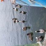 Shem Creek and its animals