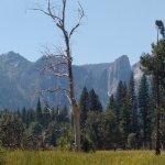 Views in El Capitan Meadow