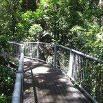 Raised walkways through the forest.