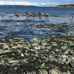 Foto de Scenic Marine Route