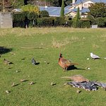 Photo de Cornwall Park