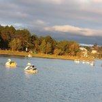 swan ride on the lake