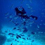 Photo of Dive Malta Dive Centre