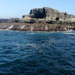 Seal Rocks at The Nobbies