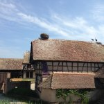 Ecomusee d'Alsace - House 8 - Storks everywhere