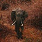 Kabini Wildlife Safari- Day Tours