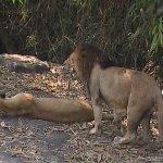 Neyyar Wildlife Sanctuary Kerala - India