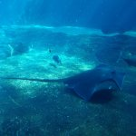 Foto de uShaka Sea World Aquarium