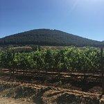 Foto di Azienda Agricola Leda' d'Ittiri