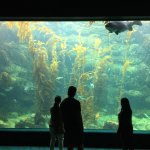 Cool Kelp Forest Display