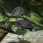 Foto de National Aquarium